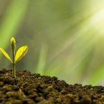 sustentabilidad bioeconomía
